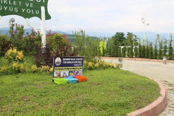 Sapanca'da Sokak Hayvanları İçin Su Ve Yemek Kapları Yerleştirildi