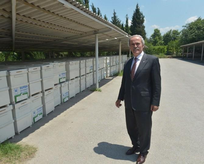 Bursa'da Arı Yetiştiricilerine 450 Kovan Dağıtıldı