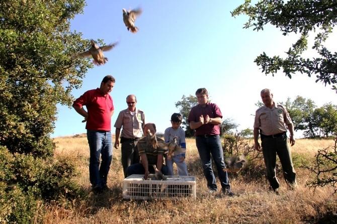 Keklikler Doğaya Salındı