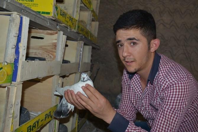 Özel Haber - Kuluçkaya Yatan Güvercinlere Özel İlgi