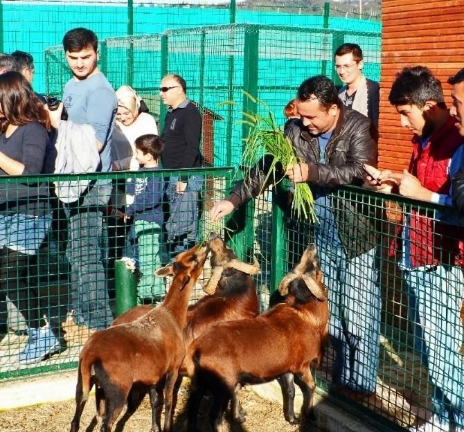 Giresun Hayvanat Bahçesi Ziyaretçilerini Bekliyor