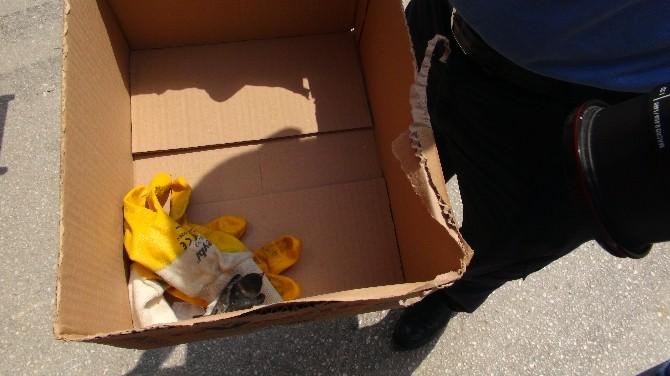 (Özel Haber) İtfaiye Ekiplerinin Yuvadan Düşen Kuş Yavrusu İçin Mücadelesi