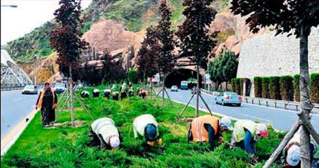 Büyükşehir'den yabani ot temizliği