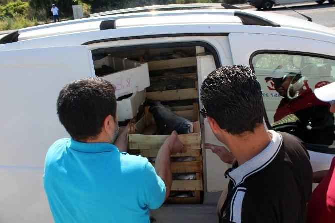 Aydın'da Su Ürünleri Satan 9 İşletmeye Ceza Kesildi