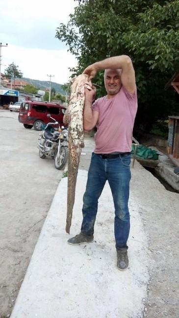 Belediye Meclis Üyesi Oltayla 27 Kiloluk Yayın Balığı Yakaladı