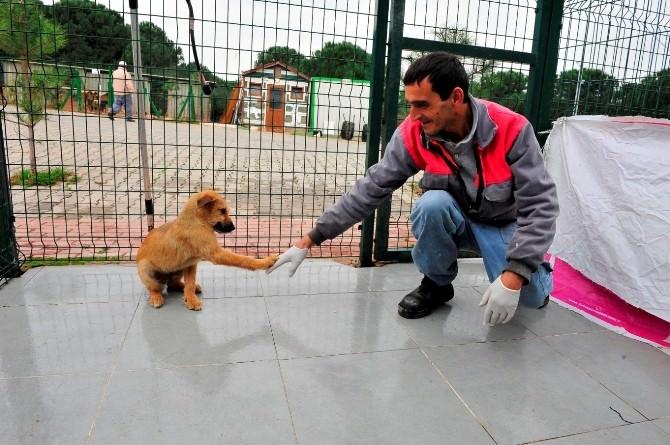 Yıldırım Belediyesi Bin 255 Hayvanı Tedavi Etti