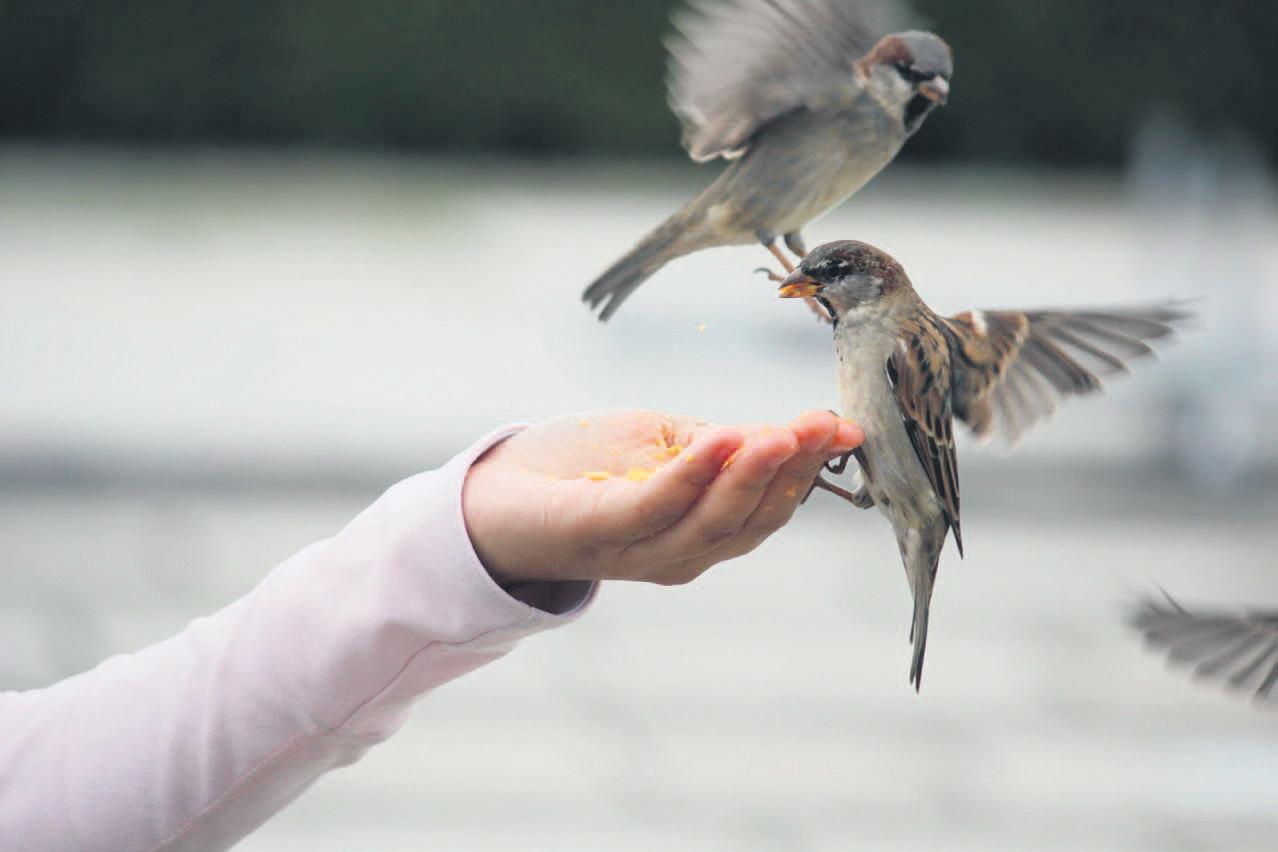 Kendi elleriyle bir köpek için bir kuş yapmak mümkün müdür