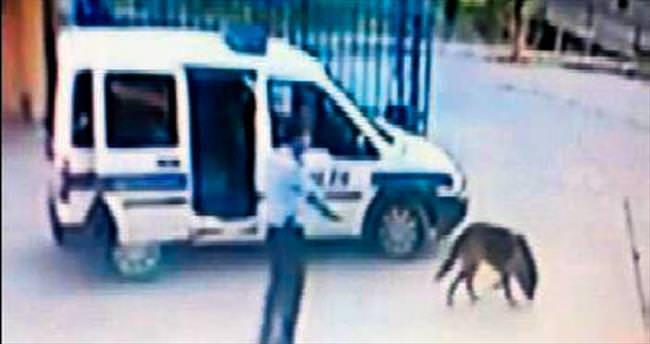 Karakol bahçesinde köpeği vuran komisere soruşturma