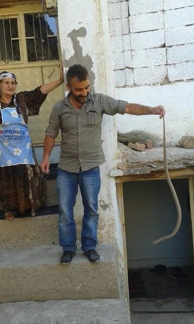 Evine Giren Yılanı Kuyruğundan Tutup Dışarı Bıraktı