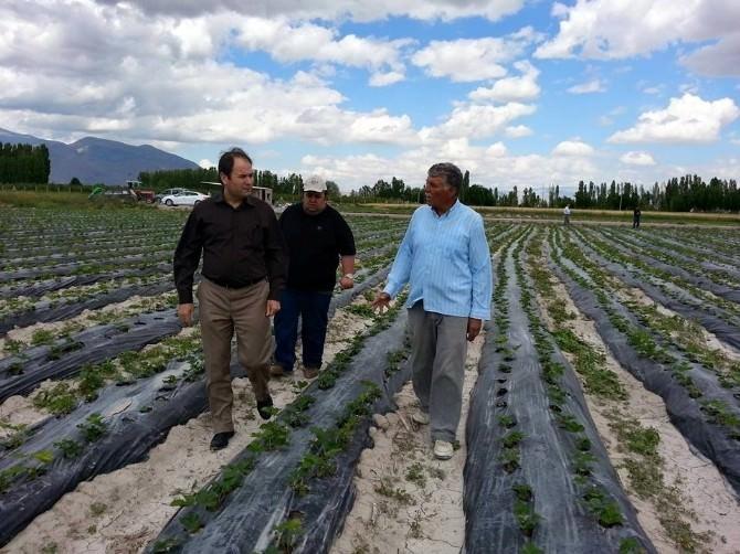 Niğde'de Çilek Üretimi Artıyor