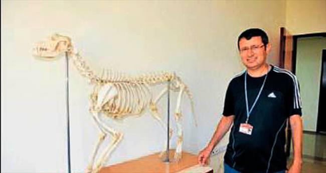 Hayvan İskeletleri Müzesi açacaklar
