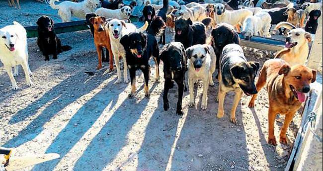 Turizm cenneti Çeşme'de köpek krizi