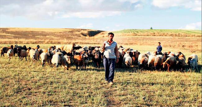 Yabancı çobana 'Almanya modeli'