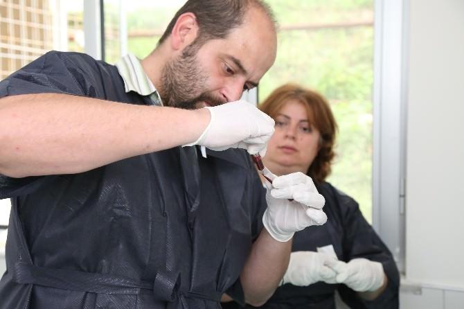 ODÜ'de Fareler Üzerinde Deney Çalışmaları