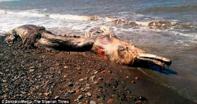 Rusya'da sahile vuran gizemli canlı