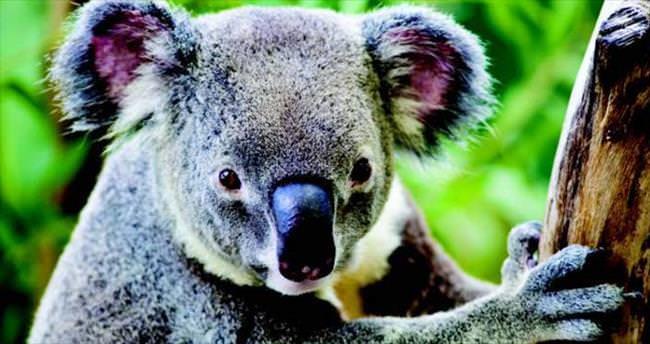 Avustralya'yı 5 adımda tanımaya ne dersiniz?