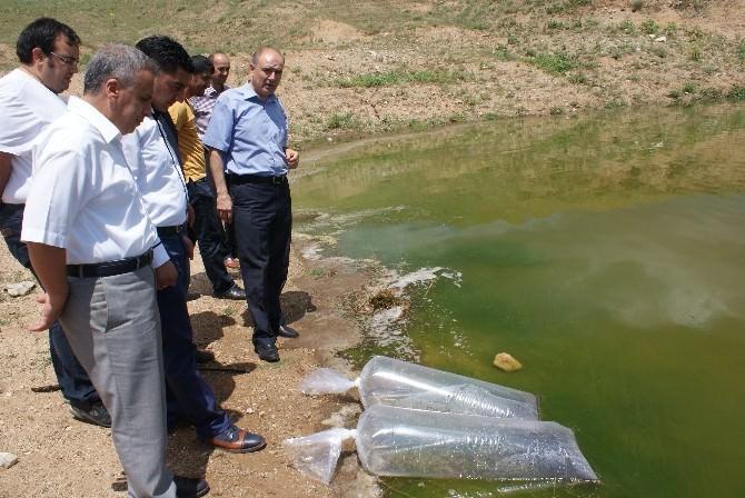Kırıkkale'de Cinali Göletine 20 Bin Yavru Balık Bırakıldı