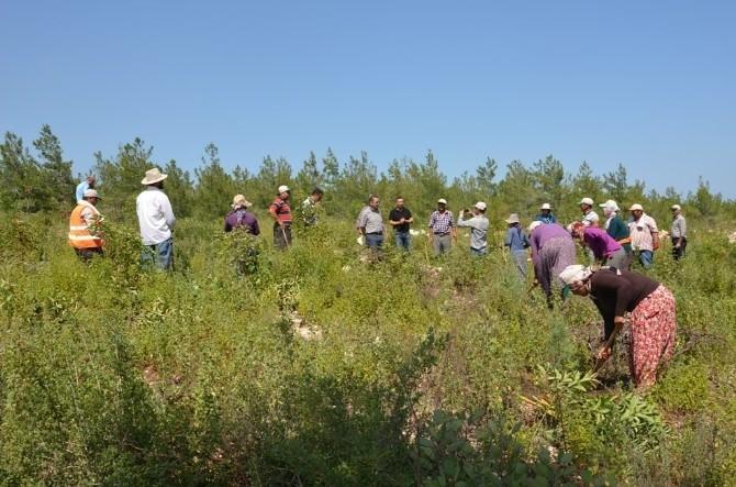 Mersin'de Yardop Ve Gelir Getirici Tür Sahalarında Çalışmalar Sürüyor