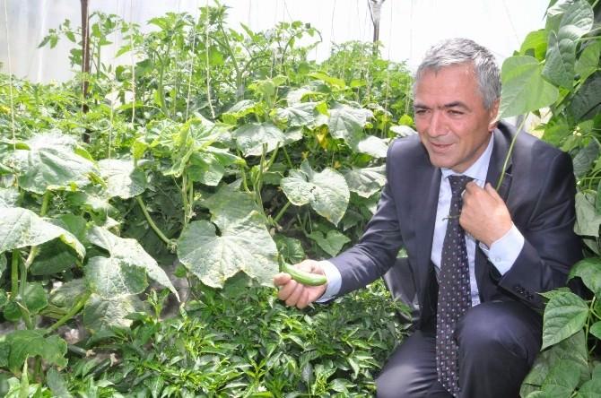 Yozgat'ta Polis Müdürü Hobi Bahçesinde Sebze Yetiştiriyor