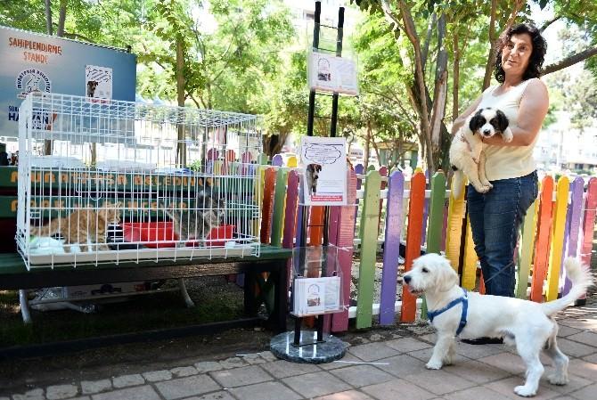 Muratpaşa'dan Sokak Hayvanları Projesi