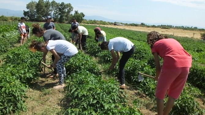 Öğrenciler Kampta Sebze Yetiştirmeyi Öğreniyor