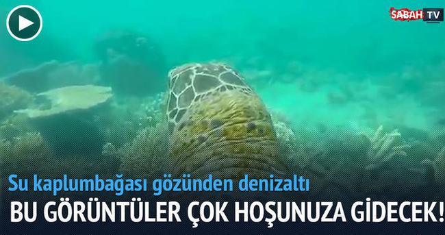 Su kaplumbağası gözünden denizaltı