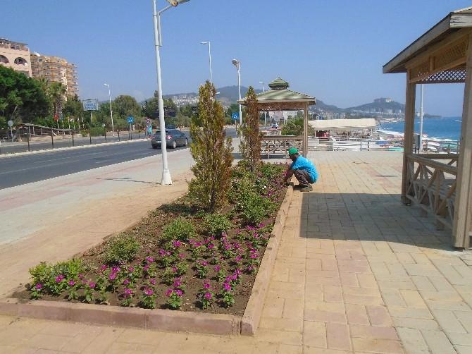 Alanya'da Peyzaj Ve Bakım Çalışmaları Devam Ediyor