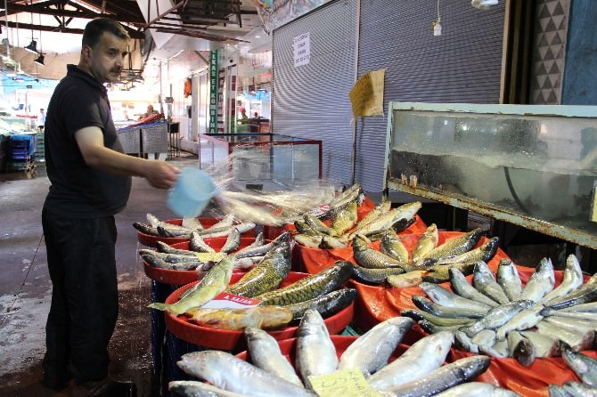 Av Yasağının Kalkmasıyla Balık Satışları Artı