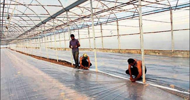 Kimyasala karşı solarizasyon