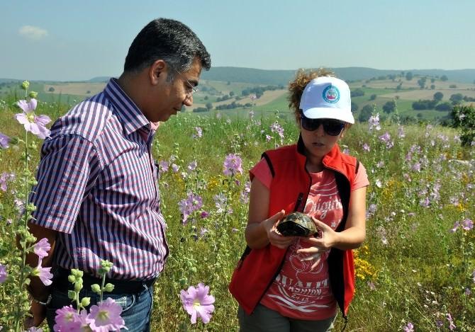Bilecik'te Ulusal Biyolojik Çeşitlilik Envanter Ve İzlemeprojesi