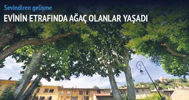 Evinin çevresinde ağaç varsa yaşadın