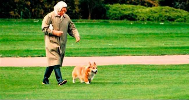 Kraliçe artık yeni köpek almayacak