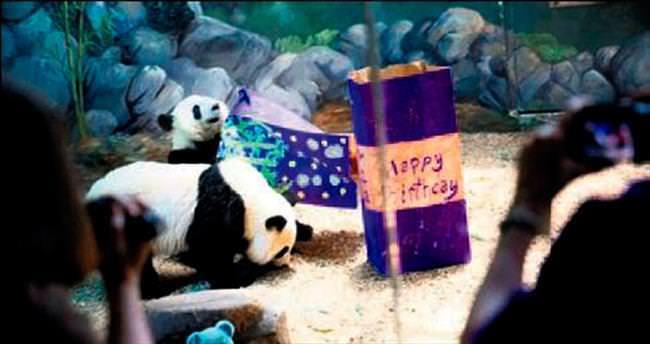İkiz pandalar için doğum günü partisi