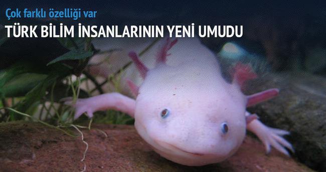 Türk bilim insanının yeni umudu