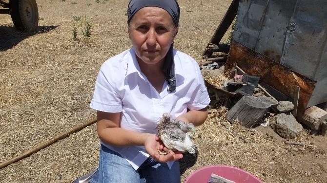 Burhaniye'de Neşe Hanım Anası Çalınan Yavruya Sahip Çıktı