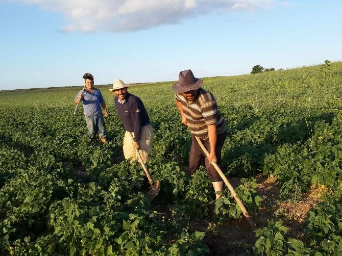 Yozgat'ın Lök Köyünde Çiftçiler Fasulye Üretimine Yöneldi