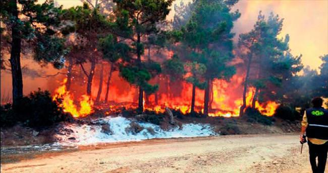 100 hektar yeşil alan kül oldu