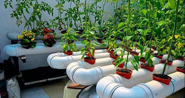 Solucan gübresi ile topraksız tarım