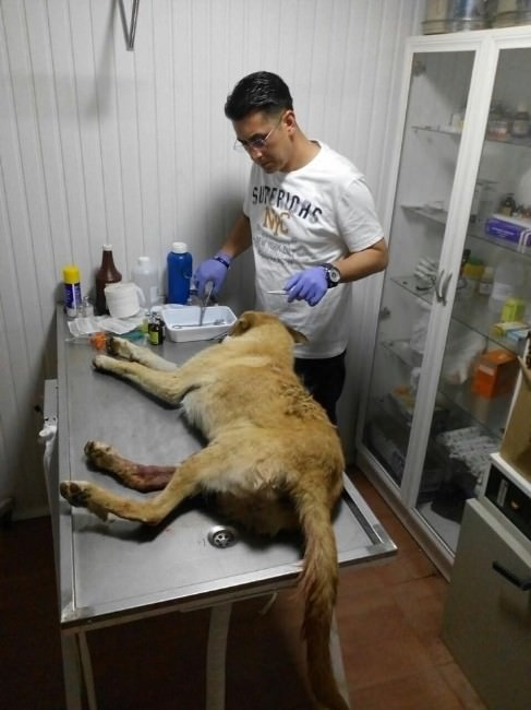 Çarptığı Köpek İçin Veteriner Çağırdı