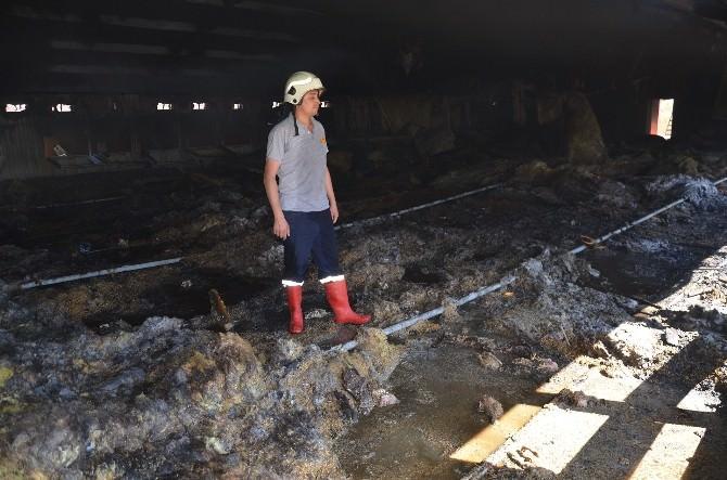 Çiftlik Yangınında 25 Bin Tavuk Telef Oldu