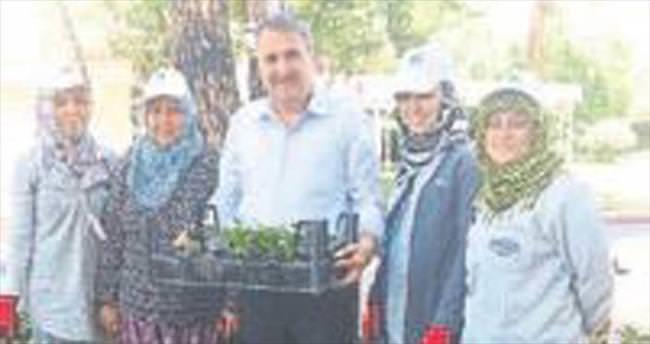 Yunusemre'de 30 bin çiçek toprakla buluştu
