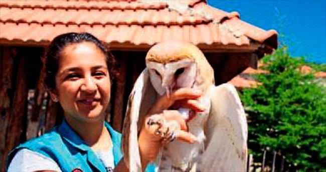 Peçeli baykuş artık doğal yaşama döndü