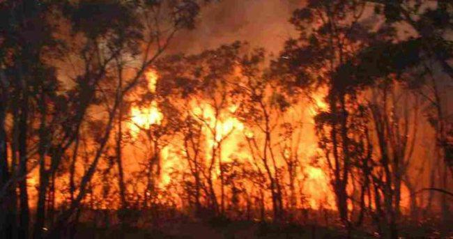 İki şehit sonrası çıkan çatışmalar ormanı yaktı