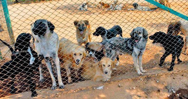 Mobil kliniğe veteriner engeli