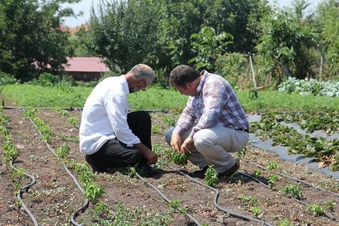 Büyükşehirden Çiftçiye Destek Devam Ediyor