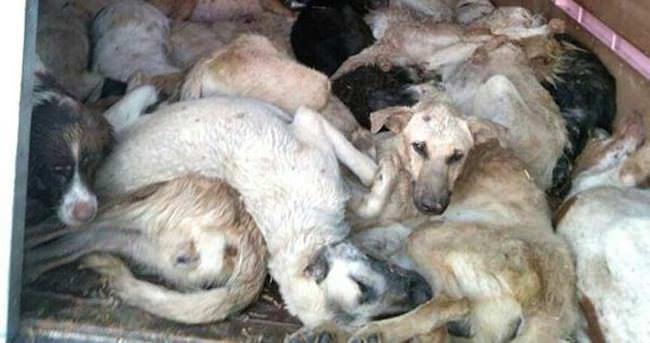 Çivril'de köpek katliamı