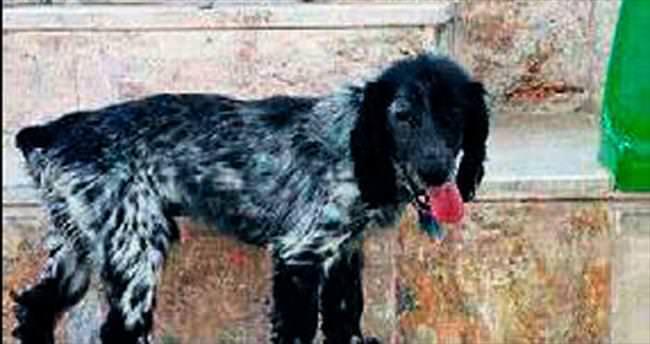Geriatri hastaları için köpekli tedavi