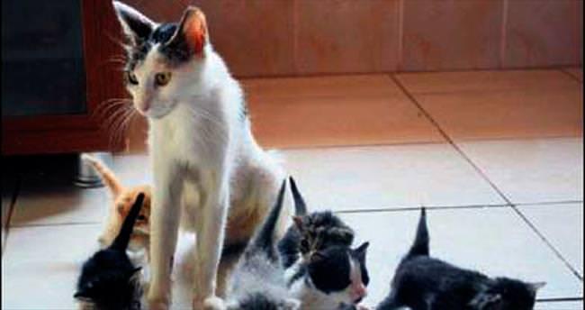 Bomba sandılar yavru kedi çıktı