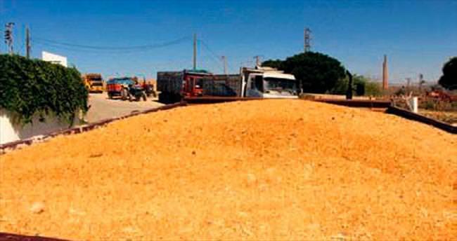 TMO Kırıkkale'de 120 bin ton alım yaptı