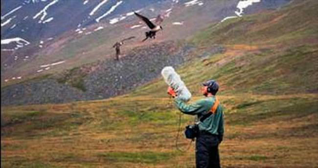 Dünyanın en geniş hayvan sesi arşivi